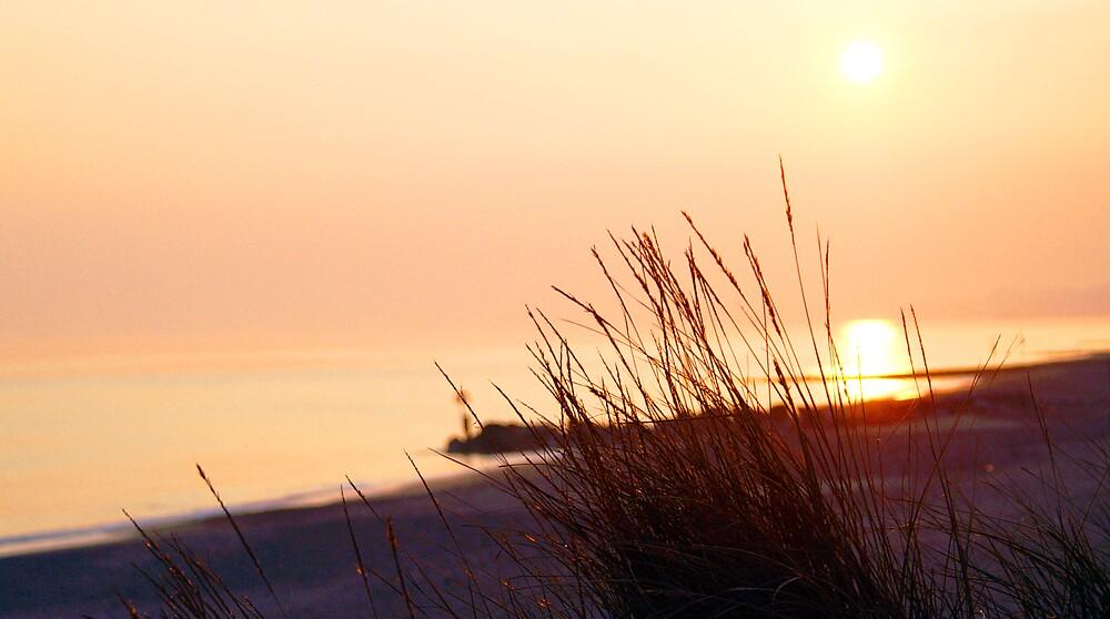 Grass sunset. Hengistbury Head  by kimberleyB