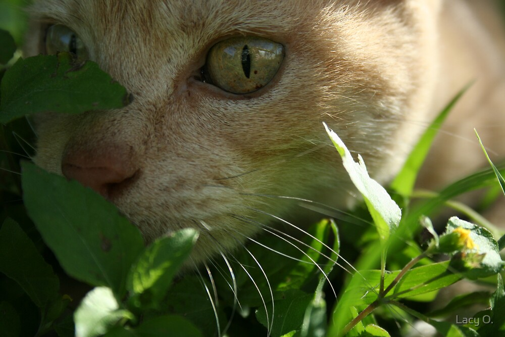 tiger in the grass II by Lacy O.