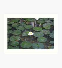 Lilly Pad Art Print