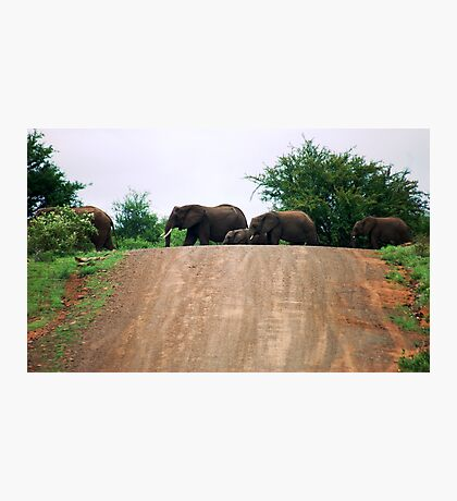 """THE ELEPHANT CROSSING"" Photographic Print"