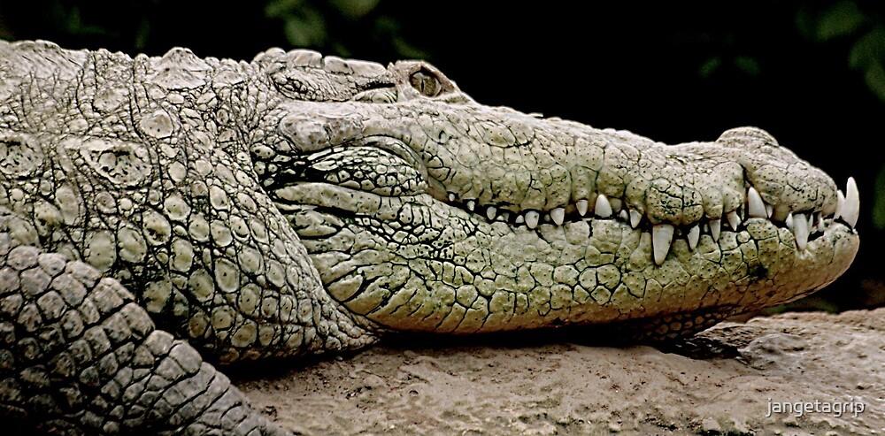 Croc by jangetagrip
