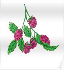 Rasberry Poster