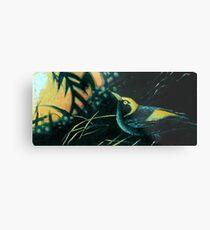 Bowerbird Dawning Metal Print