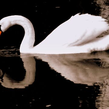 Swan lake by meimages