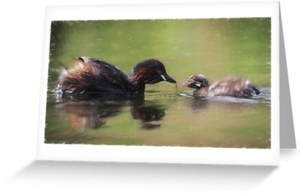 Little Grebe Family (Colour Pencil Effect) by shaftinaction
