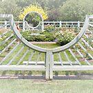 Sun Shining Over the Beautiful Rose Garden by Sherry Hallemeier