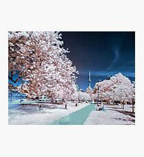 CN Tower from Trinity Bellwoods Park in Infrared Photographic Print
