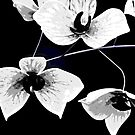 Glass Art Flowers in Black and White by Sherry Hallemeier