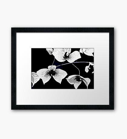 Glass Art Flowers in Black and White Framed Print