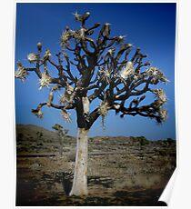Joshua Tree Memorial Poster