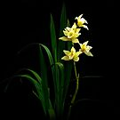 Orchid3 by macragraphics