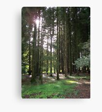 Sunlight Through the Trees at Blarney Castle  Canvas Print