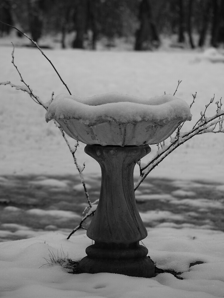 Frozen Birdbath by KnockKnockPhoto