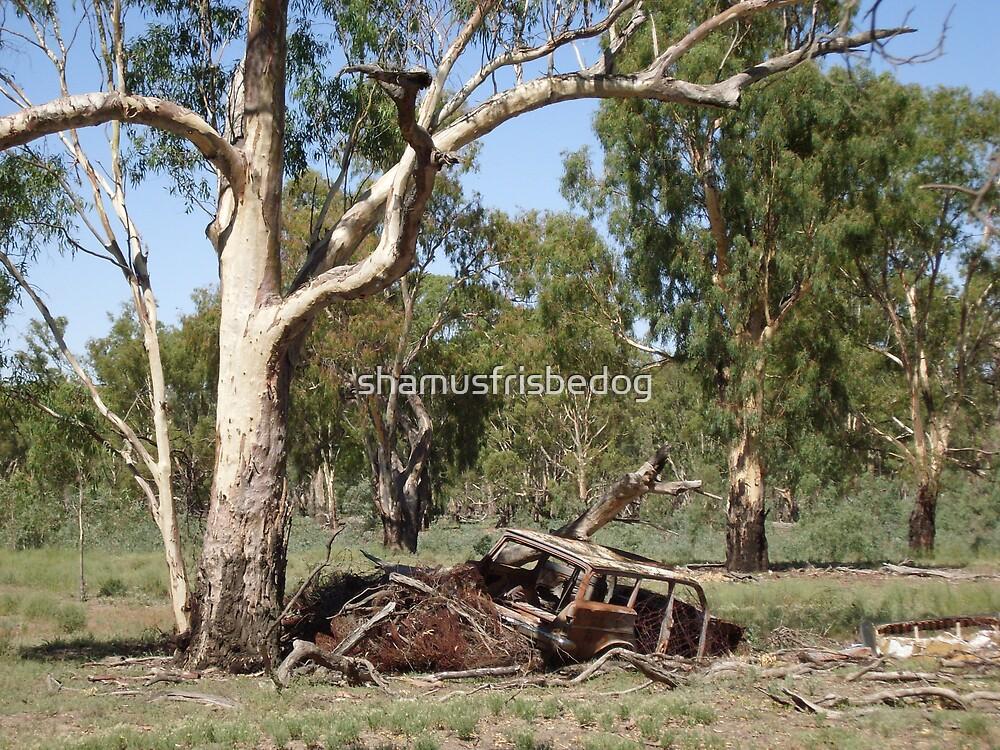 crashed here long ago by shamusfrisbedog