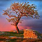 0443 Tree and Rock - Dog Rocks by Hans Kawitzki