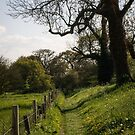 The Wall Lane at Silchester by frommyhorizon