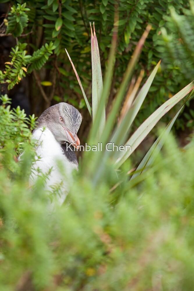 Shy Penguin by Kimball Chen