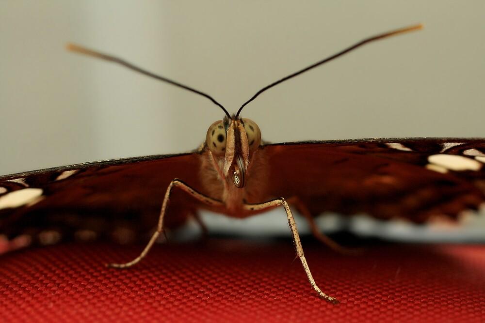 Eyes of a Butterfly by Luke Haggis