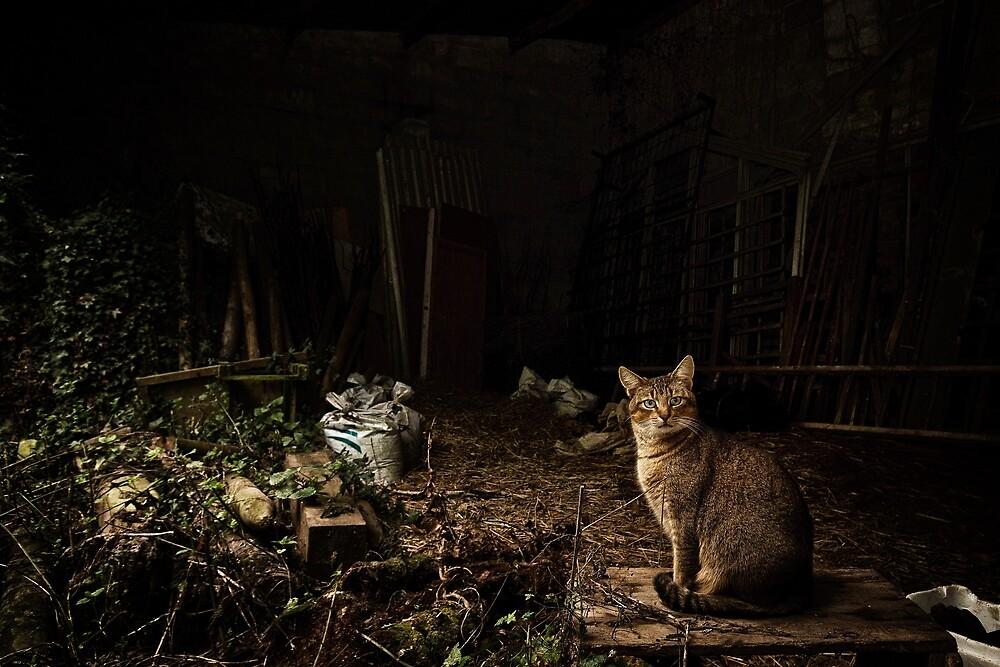 Cat in a barn by Paul Wratislaw