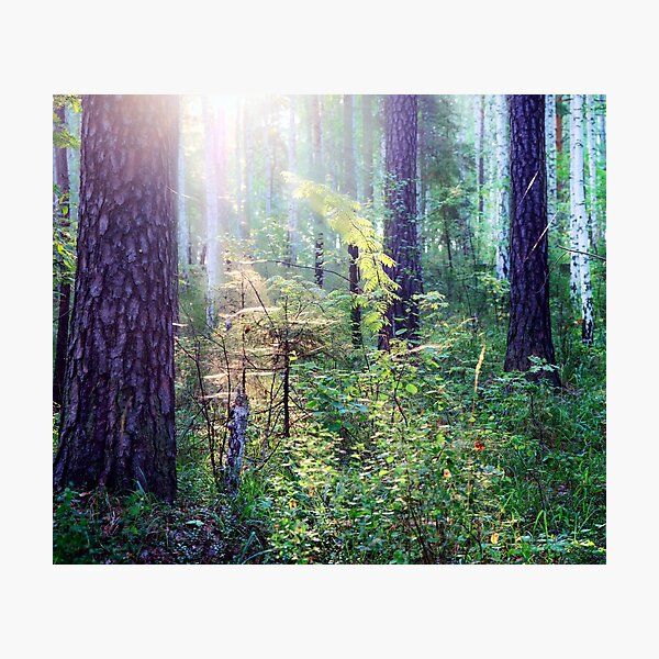 Sunny morning in the forest Photographic Print