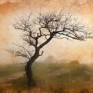 0466 Winter Tree by Hans Kawitzki