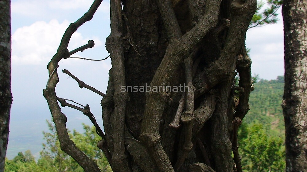 tree nature wiered by snsabarinath