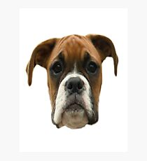 Boxer Dog innit Photographic Print