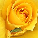 Lost in Yellow by Ludwig Wagner