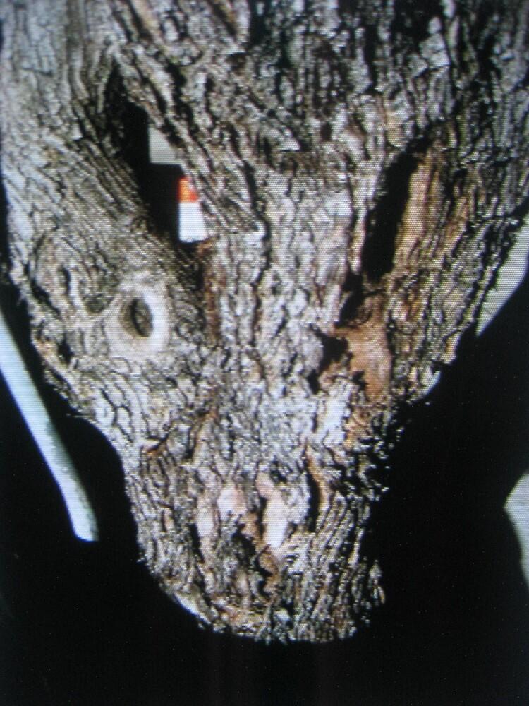 Alligator tree by twa5150