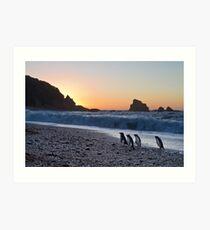 Fiordland Crested Penguin - New Zealand Art Print