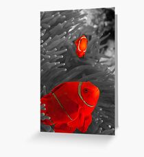 Spinecheek Anemonefish - selective colourisation Greeting Card