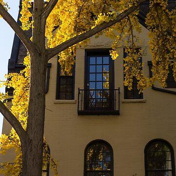 Yellow on Yellow - Golden Ginkgo Biloba and an Elegant Facade by GeorgiaM