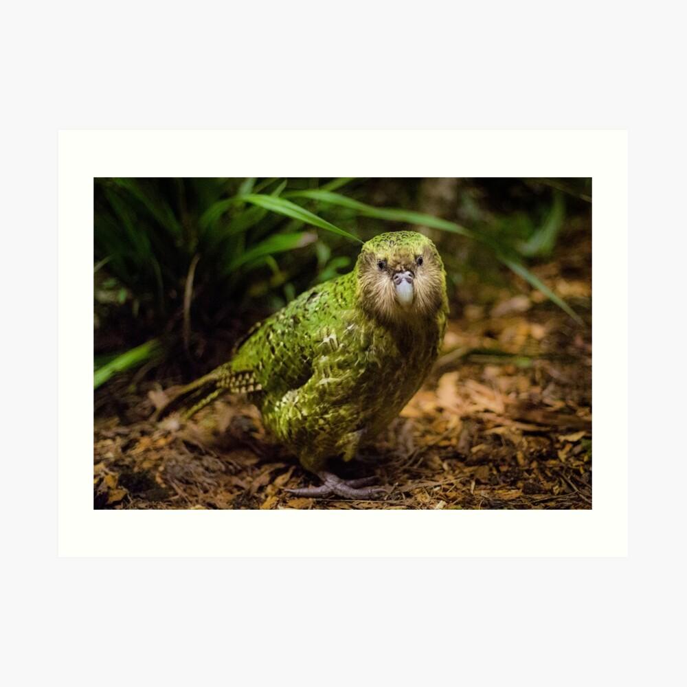 Sirocco der Kakapo Kunstdruck