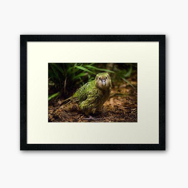 Sirocco the Kakapo Framed Art Print