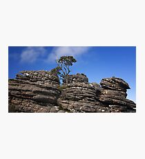0471 Tree on rocks - Grampians Photographic Print