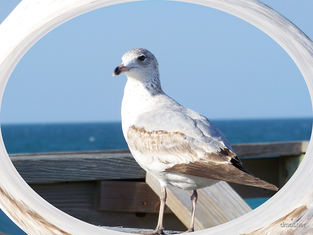 Gull by dmosher