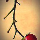 Cherry Tomato by iamelmana