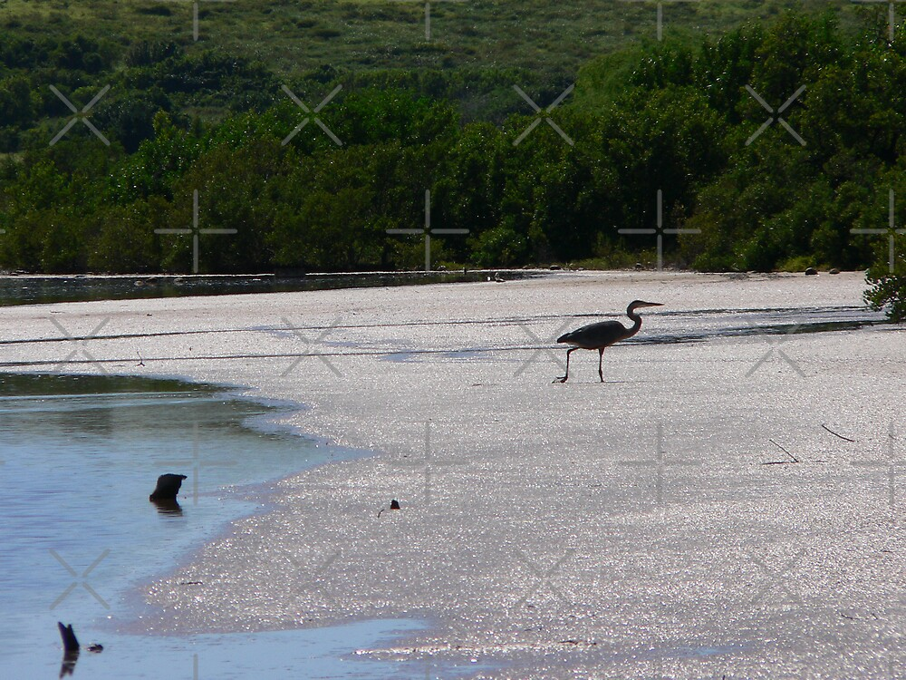 Heron At Low Tide by kevint