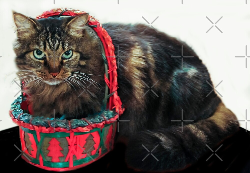 I Am Not Happy...This Basket Is Too Small! by Heather Friedman