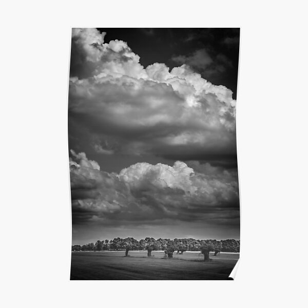 Willows and clouds II (monochrome) (Schalkwijk, Utrecht) Poster