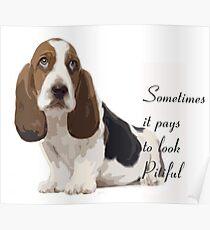 Pitiful puppy basset hound Poster