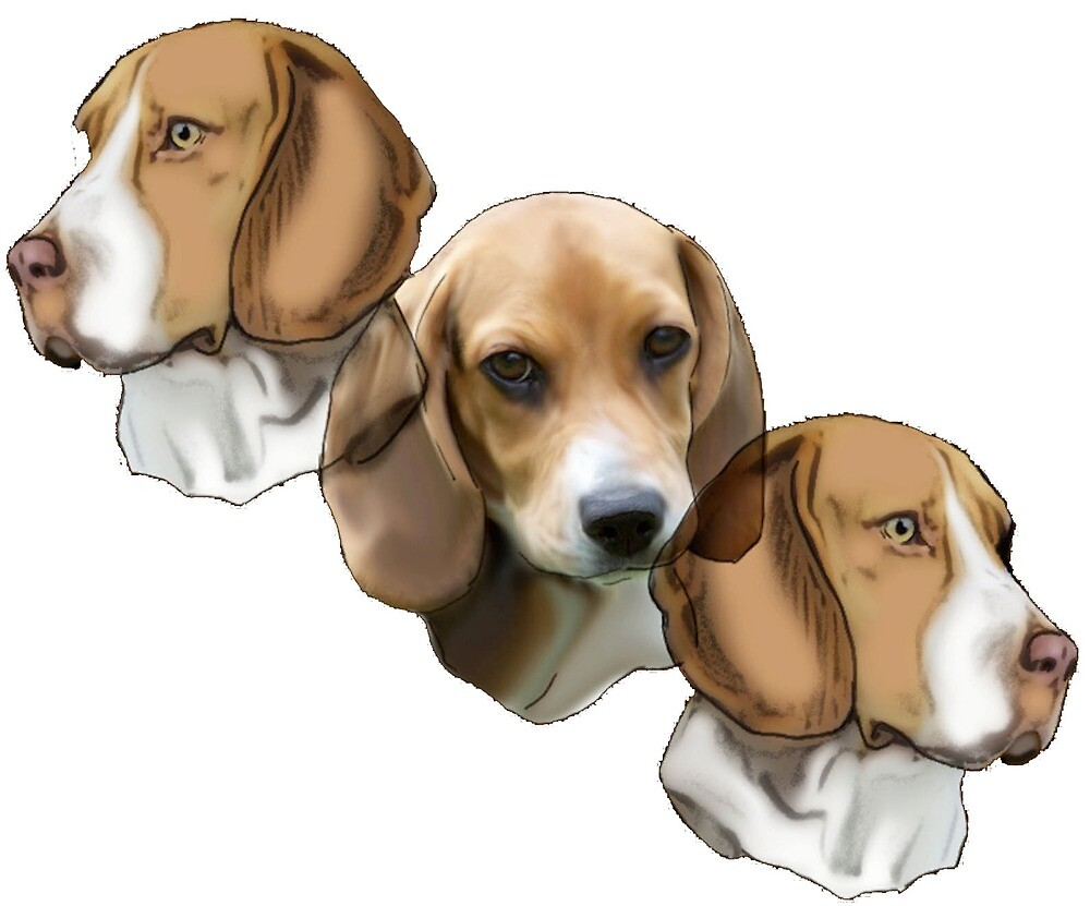Three beagle portraits by IowaArtist