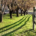 Shadow of the Fence by Nadya Johnson