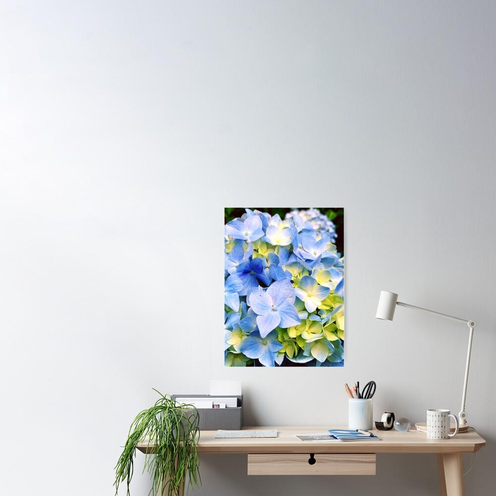 Gardener Gift - Blue Hydrangeas Poster