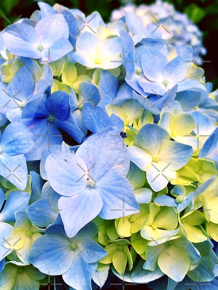 Gardener Gift - Blue Hydrangeas by OneDayArt