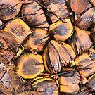 Coconuts by DJ Florek