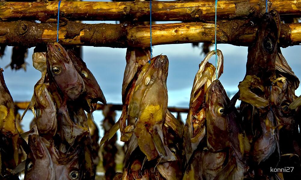 Fish heads! by konni27
