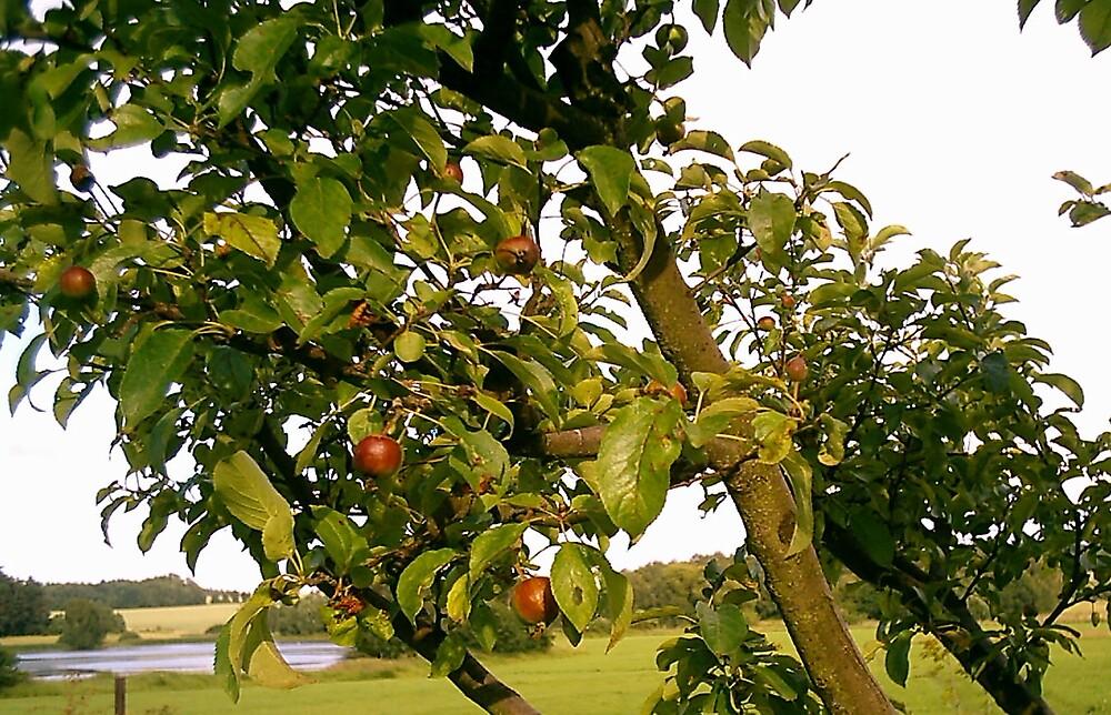 Czech Republic Cherry Tree by mpeakclewett