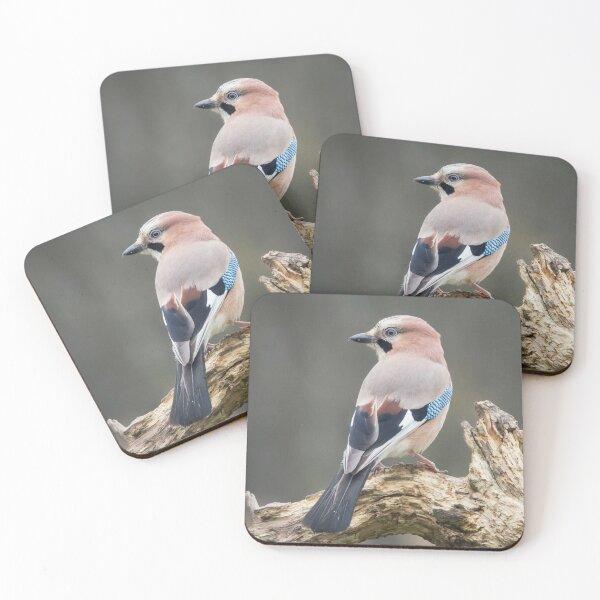 Eurasian Jay #1 Coasters (Set of 4)