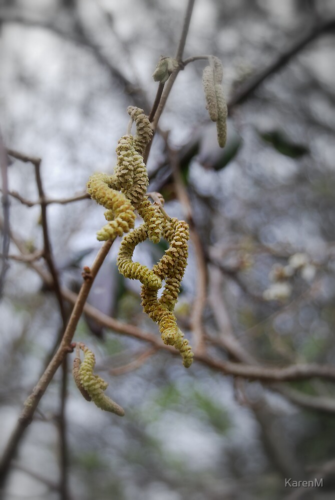 Curly Catkins by KarenM